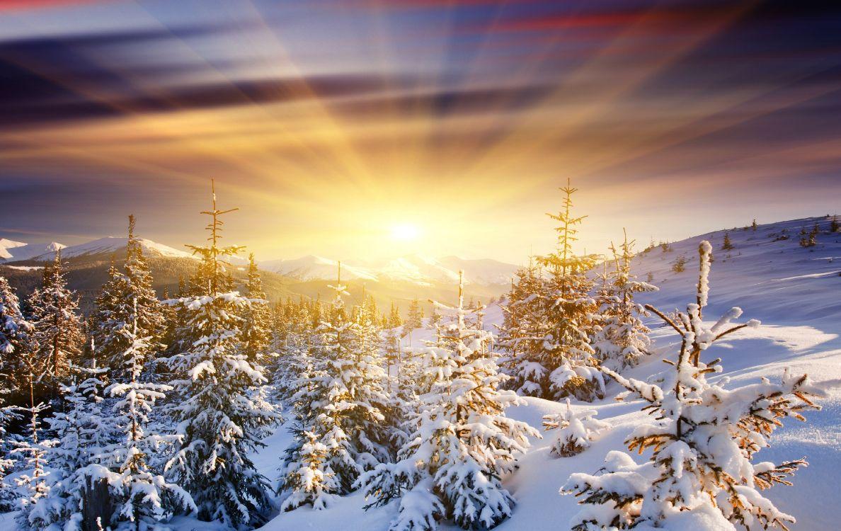 Schneebedeckte Kiefern Bei Sonnenuntergang. Wallpaper in 3870x2443 Resolution