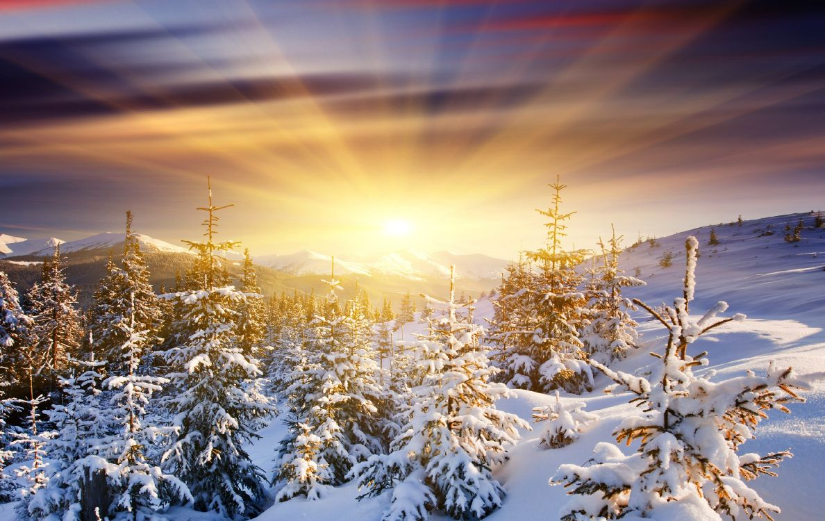 Snow Covered Pine Trees During Sunset. Wallpaper in 3870x2443 Resolution