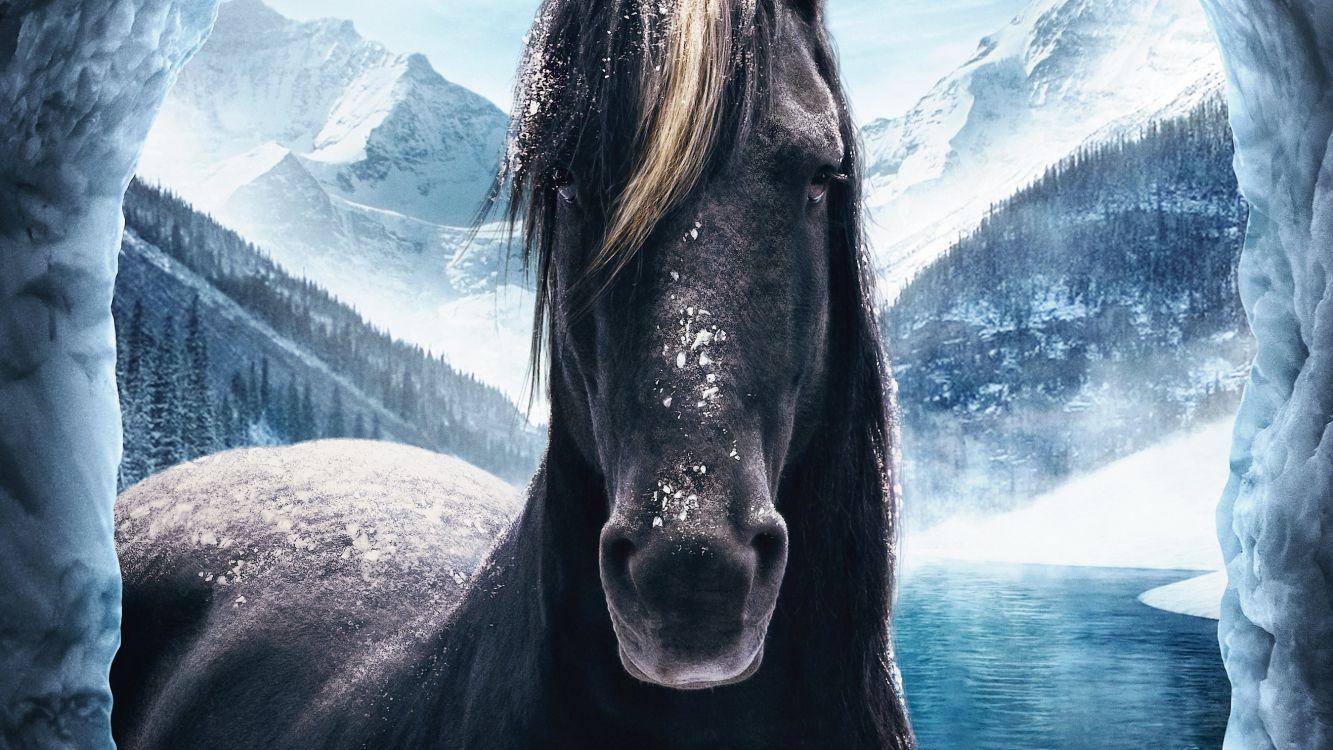 Pferde desktop-hintergrundbilder kostenlos Desktop Hintergrundbilder